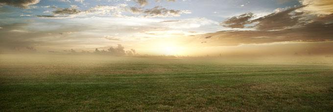 grassy_field_sunset